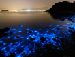 Luminous Lagoon in Falmouth, Jamaica.